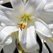 flower-3162721_1920